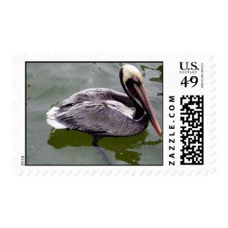 Pelican 2 stamp