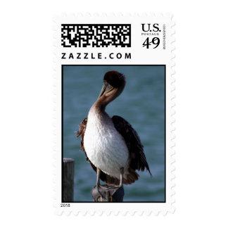 Pelican 3 stamp