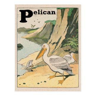 Pelican Alphabet Post Card