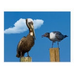 Pelican and Gull Postcard