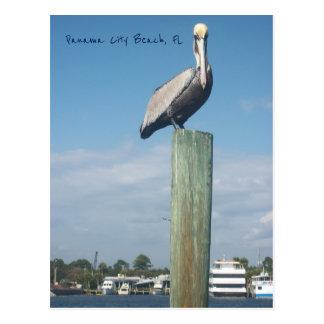 Pelican at Panama City Beach, FL Postcard
