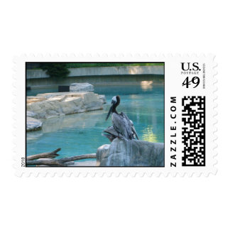 Pelican at Smithsonian Zoo Stamps