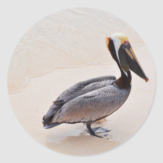 Pelican at the beach classic round sticker