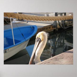 Pelican at the Marina Poster