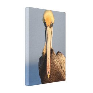 Pelican Attitude Gallery Wrap Canvas
