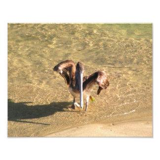 Pelican Bathtime Photograph