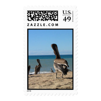 Pelican Beach Bums Stamps