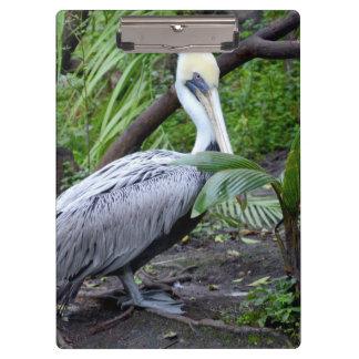 pelican behind plant c bird design clipboards