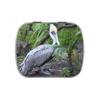pelican behind plant c bird design jelly belly candy tins