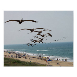 Pelican Bird Gang flying over OBX beach Print