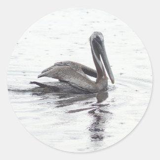 Pelican bird in the rain classic round sticker