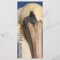 Pelican Birds Wildlife Animals Beach Ocean