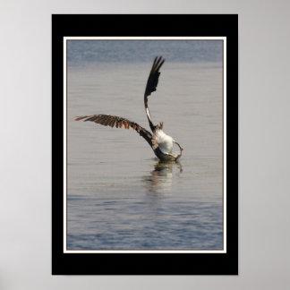 Pelican Birds Wildlife Animals Poster