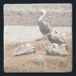 """Pelican Birds Wildlife Animals Stone Coaster<br><div class=""""desc"""">Wonderful Brown Pelican Birds   at the beach digital painting from   photography is on this   Stone Coaster.</div>"""