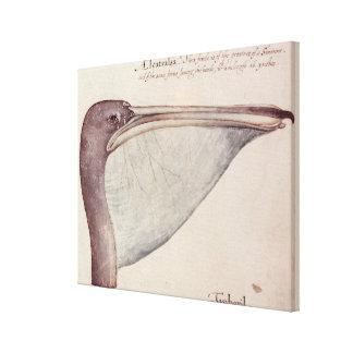 Pelican, c.1590 canvas print