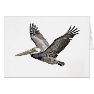Pelican Clear Card