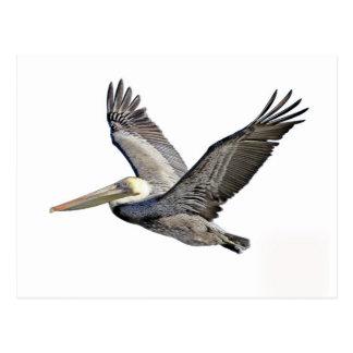 Pelican Clear Postcard