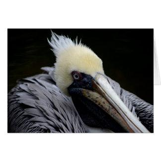 pelican close up head view bird card