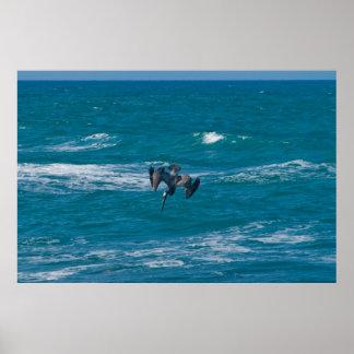 Pelican Dives Poster
