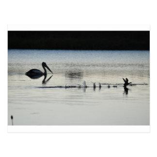 PELICAN & DUCK EARLY MORNING LANDING AUSTRALIA POSTCARD