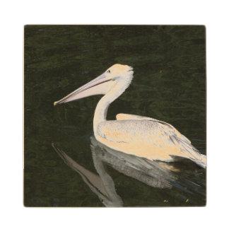 Pelican enjoying a swim. wooden coaster