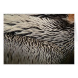 Pelican Feathers Grey Nature Photo Card