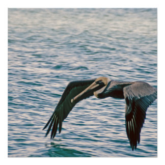 Pelican Flies Over Gulf of Mexico Poster