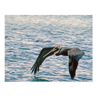Pelican Flies Postcard