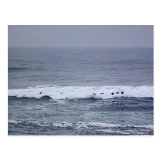 Pelican Flight Over Pacific Ocean Waves Postcard