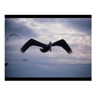 Pelican Flight Postcard