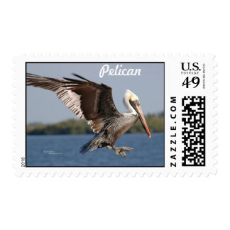 Pelican flying Postage