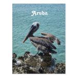 Pelican in Aruba Postcard
