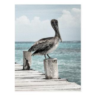 PELICAN IN BRIEF: CHILLIN'! (a shore bird design) Postcard