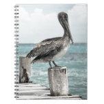 pelican in brief.jpg notebooks