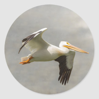 Pelican In Flight Classic Round Sticker
