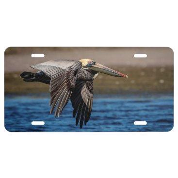 Beach Themed Pelican in flight license plate