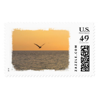 Pelican in Flight; No Greeting Postage