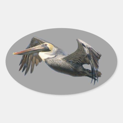 Pelican in Flight Oval Sticker