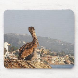 Pelican in Laguna Beach Mouse Pad