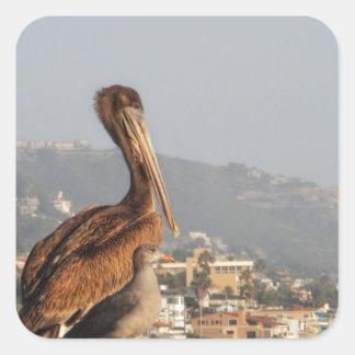 Pelican in Laguna Beach Square Sticker