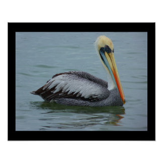 Pelican in the Water Photo Poster