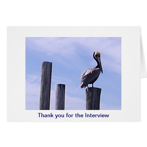 Pelican Interview Thank You Card