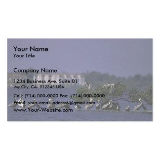 Pelican Island National Wildlife Refuge, Florida Business Card