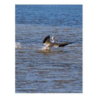 Pelican Landing Postcard