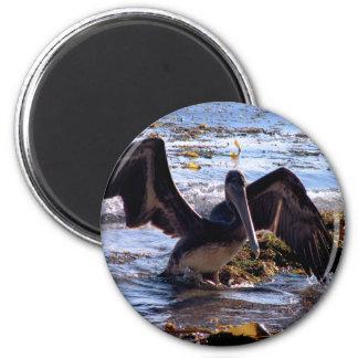 Pelican Refrigerator Magnet