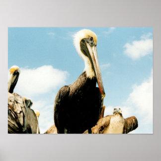 Pelican Mom and Little Beak Poster