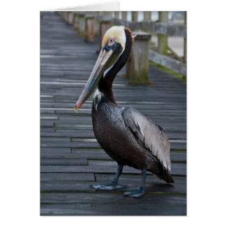 Pelican / Note Card