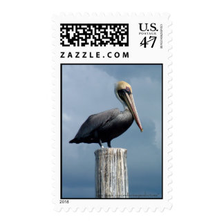 Pelican on a Piling Stamp