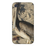 Pelican on Beach iPhone 4 Case