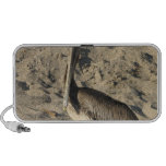 Pelican on Beach Portable Speakers